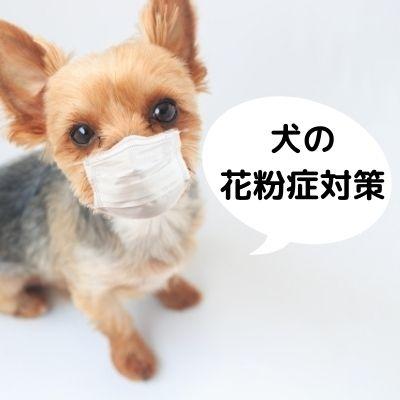 犬の花粉症対策