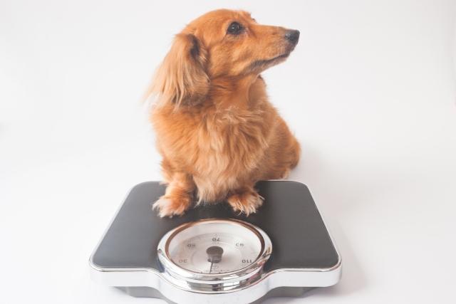 犬の健康診断おすすめ